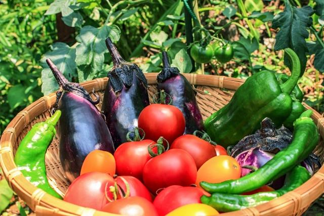 夏が旬の野菜や果物の特徴!暑さを乗り切る秘密や選び方を解説